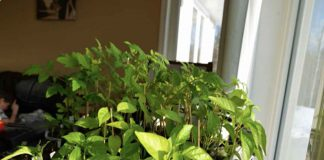 Starting your garden indoors