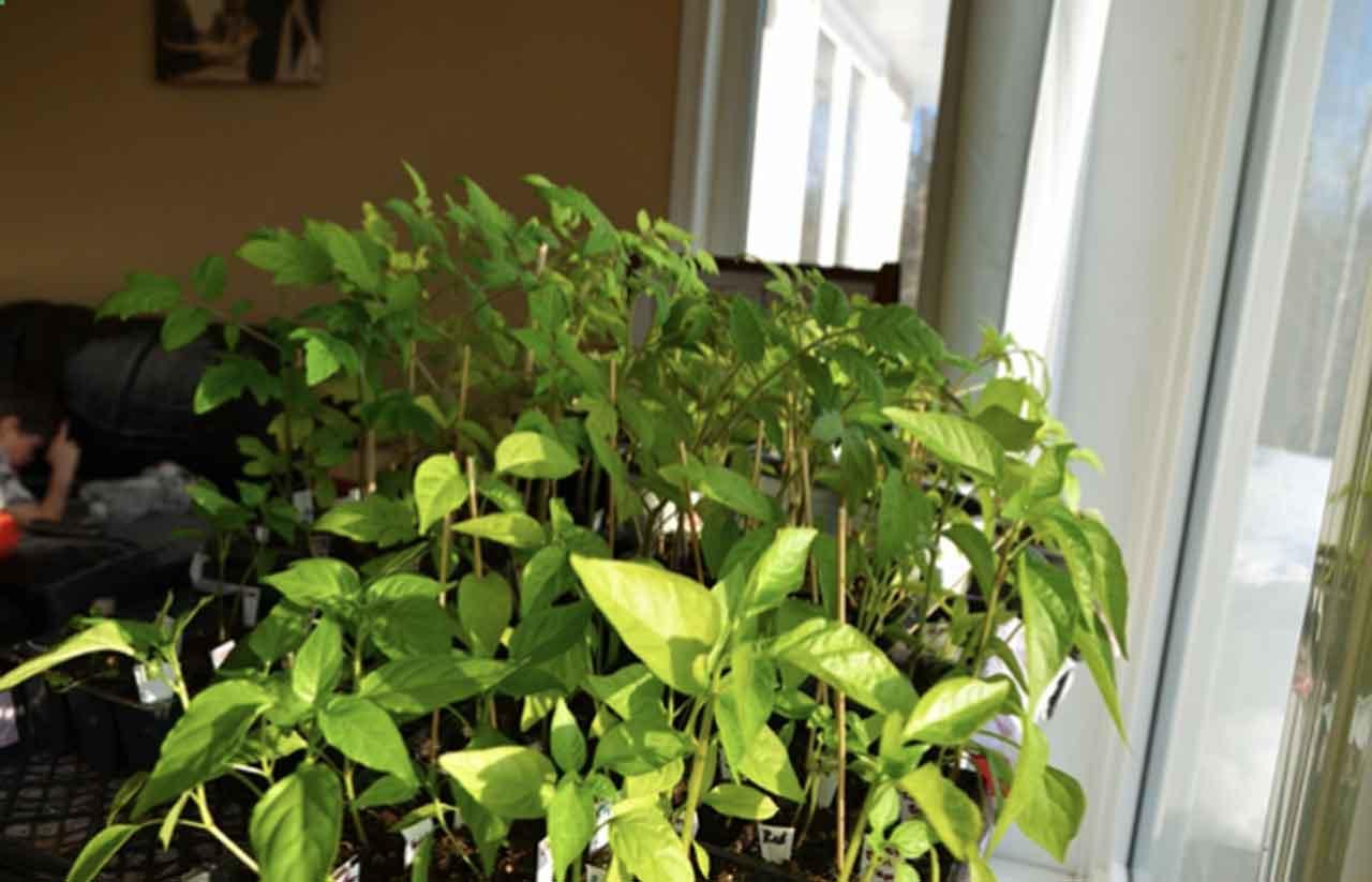 Starting your garden indoors