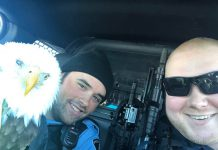 Dryden Police helped save this Bald Eagle