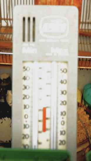 Here is a minimum/maximum thermometer. There are many types of them, and this isn't mandatory, but it is helpful if using a greenhouse to gage the temperature during the day and night. Don't let it drop below freezing, and don't let it get too hot.