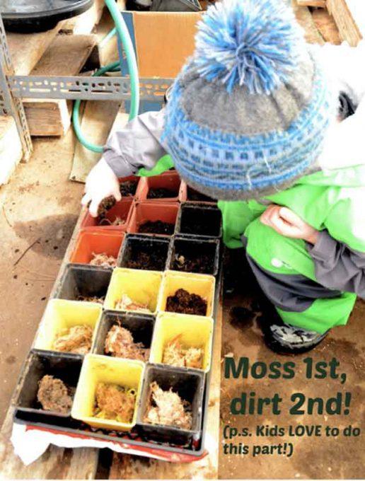 Moss First - Dirt Second