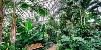 Centennial Conservatory