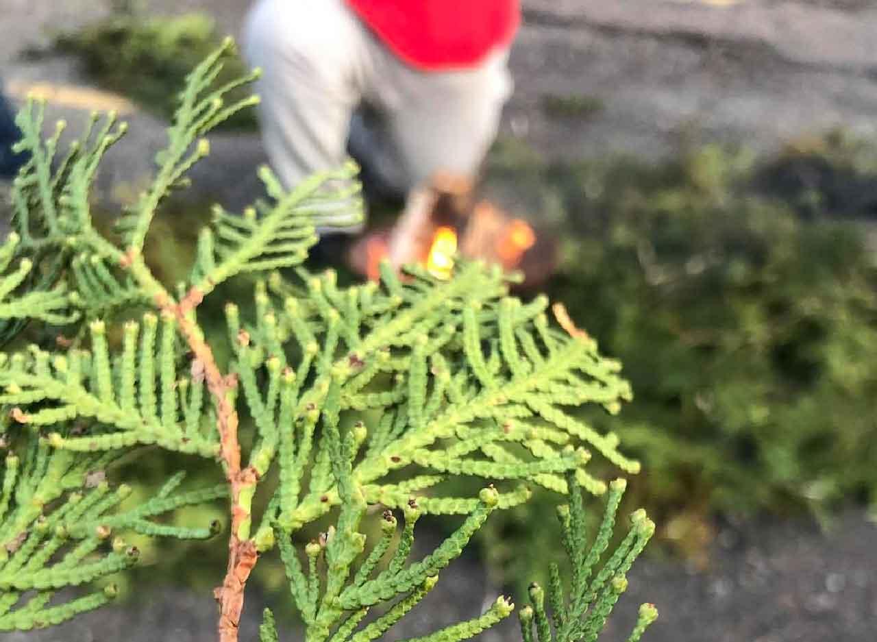 Cedar at the Sacred Fire