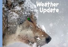 Winter Weather Update Splash