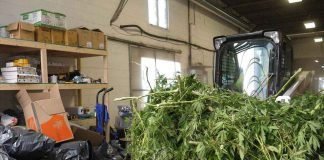 OPP have targeted illegal cannabis grow operations and sales