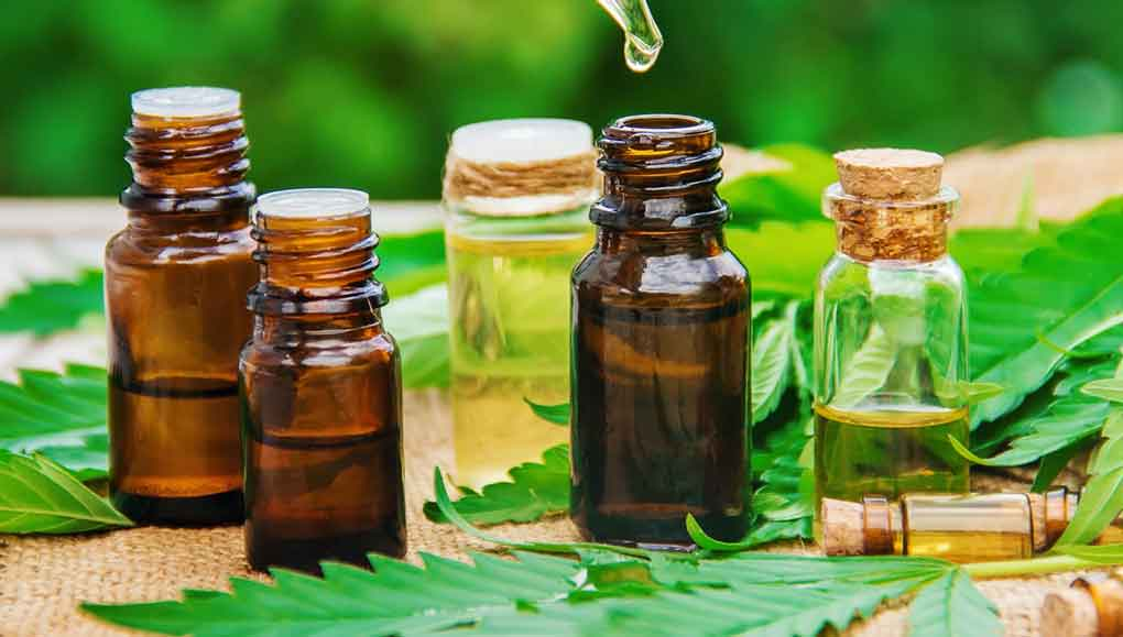 Important Points to Note before Giving CBD Oil Products to Your Pet