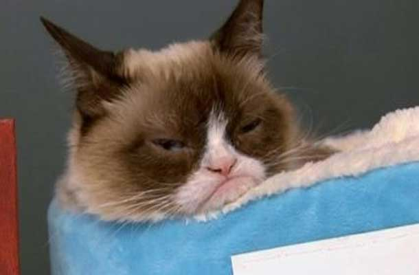 Help turn this grumpy cat's frown upside down... support Kitty Kare in Thunder Bay