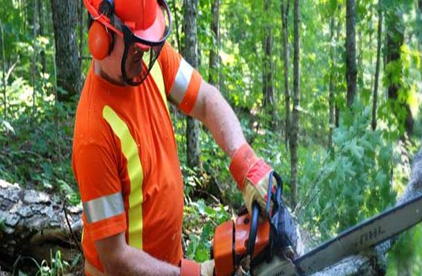 Workplace Safety North Awards Shuniah Forest Products
