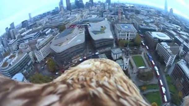 A bird's eye view of England to raise awareness of the plight of endangered raptors