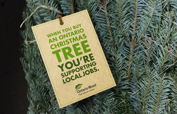Ontario Christmas Trees