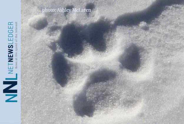 Seven Canadian Wolves translocated to Isle Royale