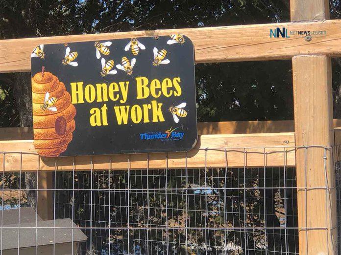 Honey bees at work at Thunder Bay Centennial Conservatory
