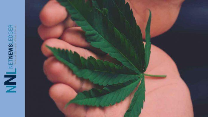 Winnipeg Police raid unlicensed cannabis operation