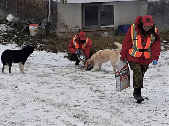 Canadian Rangers feeding dogs left behind when residents evacuated Neskantaga because of water problems. credit - PO2 Kevin McCue
