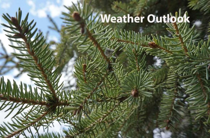 Weather Outlook Pine Trees