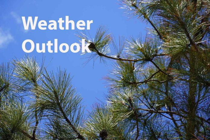 Weather Outlook Pine Trees and Blue Sky