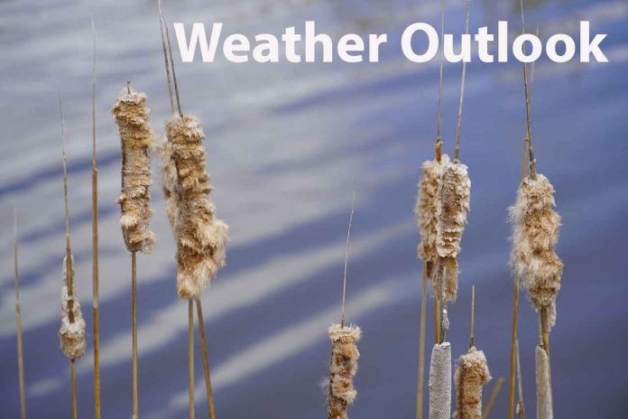 Weather Outlook Bullrushes