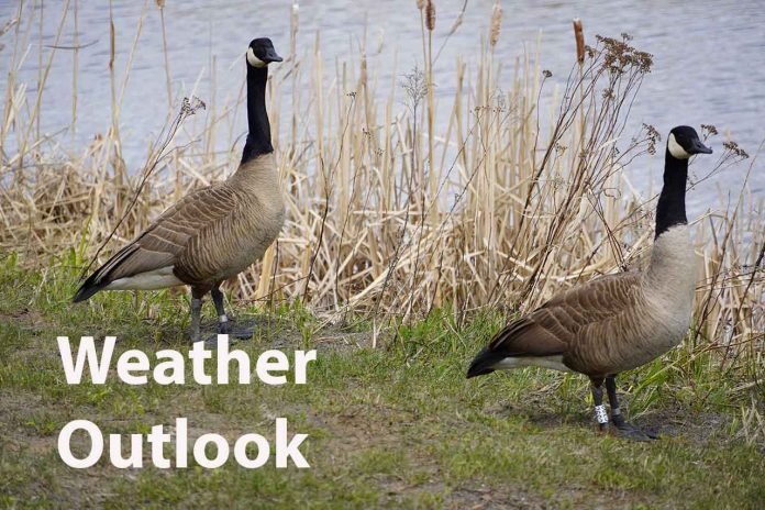 Weather Outlook Two Geese